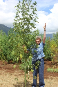 THielen with Hemp harvest plant